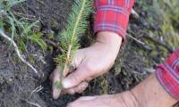 Im Oktober werden die 263 Bäume, welche den Gross- und Staatsräten geschenkt wurden, im Teelwald gepflanzt.